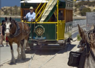 Victor Harbor - Horse Drawn Tram